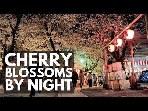 Heian Jingu & Hirano Shrine, Illuminations, Kyoto Cherry Blossoms | VEDA DAY 5 | Japan Vlog 46