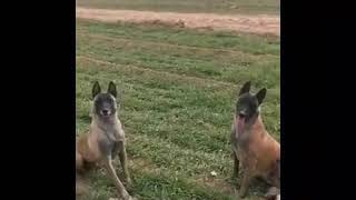 Dogs funny video you must watch
