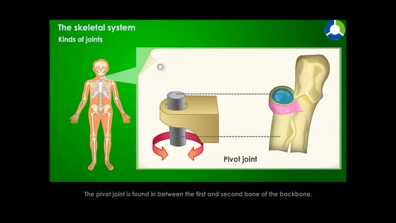 KINDS OF JOINTS - YouTube
