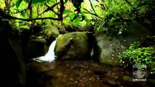 Ahmad Zahir-DIlam Dar Asheqi-New Song HD