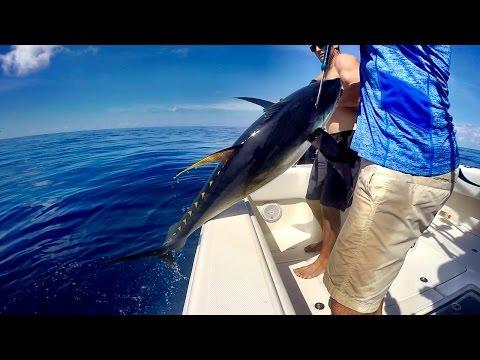 Tuna Fishing - Gulf Of Mexico