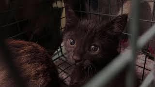 Kitten Rescue January 12 2019