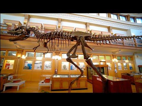 #894 Montreal's INCREDIBLE Redpath Museum at McGill - Jordan The Lion Daily Travel Vlog (1/17/19)