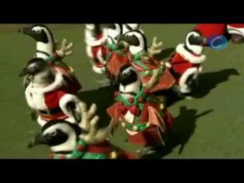 Visten a los pingüinos del zoo de Papa Noel