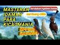 Suara Masteran Murai Batu Suara Burung Kenari Suara Burung Cililin  Mp3 - Mp4 Download