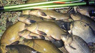 Крупный ЛИНЬ и круглый КАРАСЬ на поплавок Рыбалка на сельском пруду