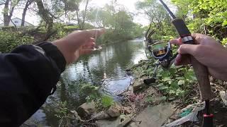 Ловля кленя на Закарпатських річках