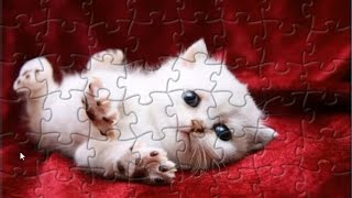 Super Cute White Kitten Puzzle Game Jigsaw Rompecabeza