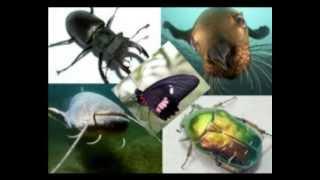 Природоведение 16. Какие бывают животные — Шишкина школа