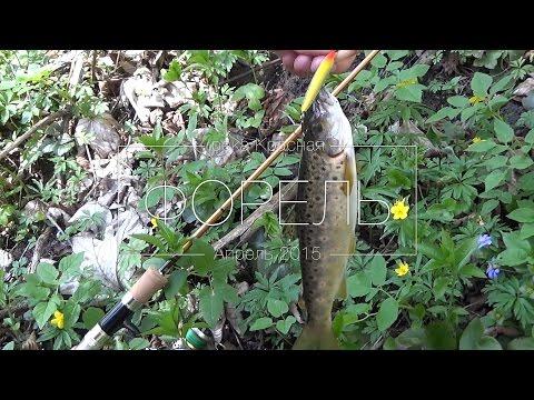 ловля форели на спиннинг в калининградской области