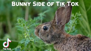 Bunny Side of Tik Tok