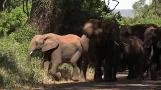 Elephants on the Move, kruger movie
