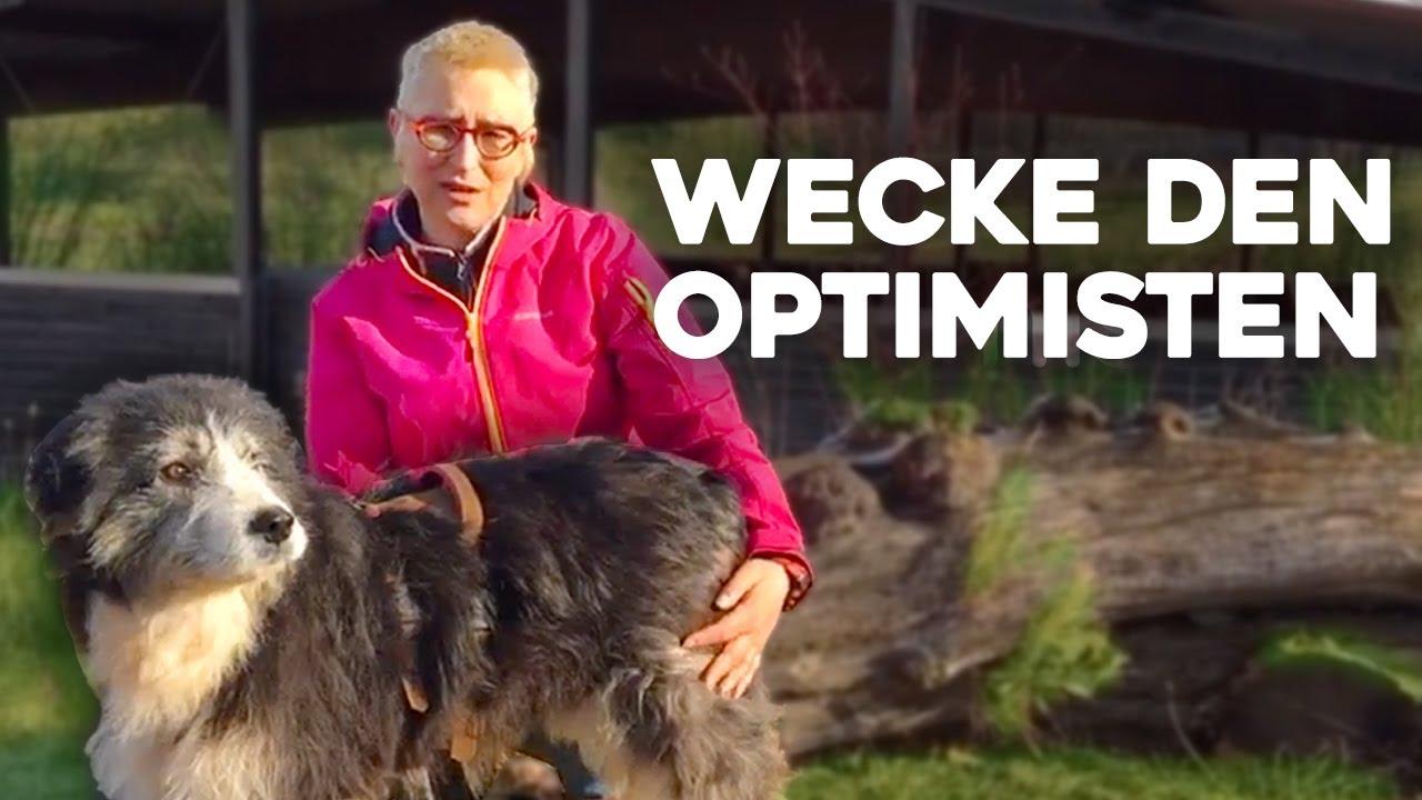 """video Wecke den """"Optimisten"""" im Hund – Onlinekurs von Mirjam Cordt"""