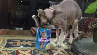 How Much Does A Sphynx Cat Like Aldi's Canned Cat Food?