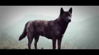 九州の里山で飼っている甲斐犬・銀三のイメージ映像です。