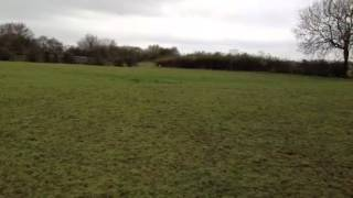 Gundog Training On A Marked Retrieve With Back Command - Labrador Retriever
