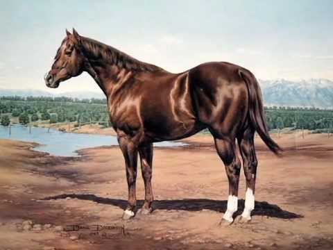 Skipper W 2011 American Quarter Horse Hall Of Fame Inductee