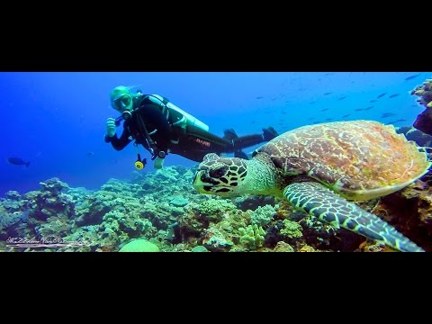 Scuba Diving Fiji with KoroSun Dive