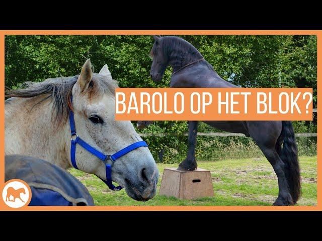 Barolo leert op het blok te stappen!