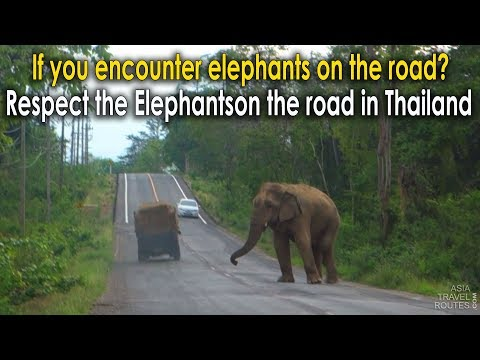 Respect the Elephants on the road in Thailand, Save the Asian Elephants