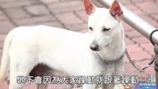 去年台灣土狗經由世界畜犬聯盟(FCI)七十多個會員國投票表決通過,成為...