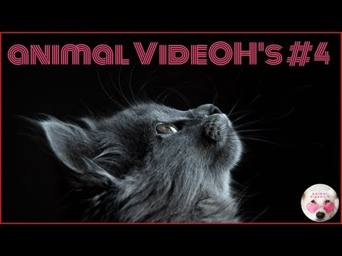 Funny Animals, Funny Pets, Cats, Dogs, Kittens and Puppies - Animals are Amazing! #4