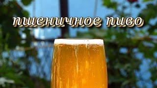 Рецепт пшенично пива от Алкофана. Домашнее пивоварение