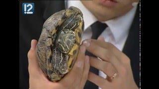 Говорим с Евгенией Кистеневой о содержании дома красноухих черепах