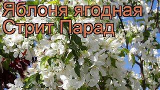 видео Яблоня ягодная