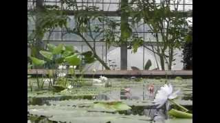 Kakegawa kachoen - Parque de flores e pássaros