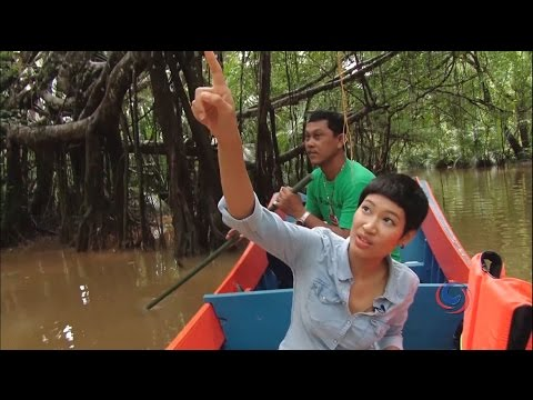 Exploring Phang Nga's virgin tropical Forest by boat