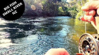 Fly Fishing Small Taupo River NZ - Winter 2020 [HD]