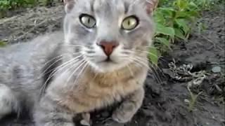 видео Актинидия Крупноплодная