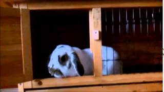 Are You Being Sold Pet Neglect? The Hutch Build