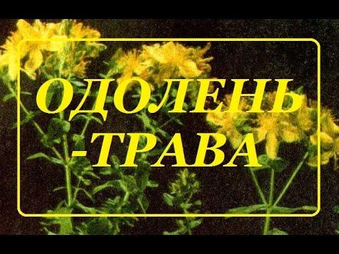 ОДОЛЕНЬ-ТРАВА
