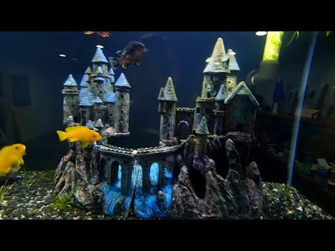 expanding-the-fish-room!-[fish-room-vlog]