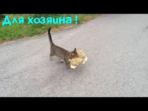 Почему кошки приносят добычу за 30 августа
