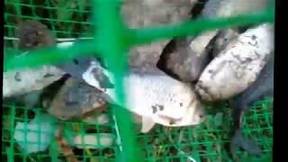 Морда-верша из пластиковой сетки для ловли рыбы своими руками