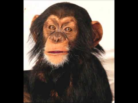 Best Buy Coupons – Hilarious Talking Chimp Explains How To Get Best Buy Coupons! Classic!