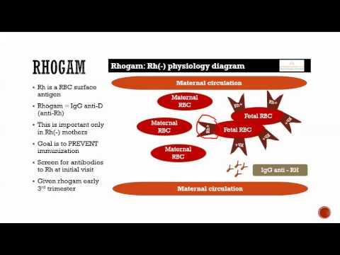 Rh(-) physiology & rhogam - YouTube