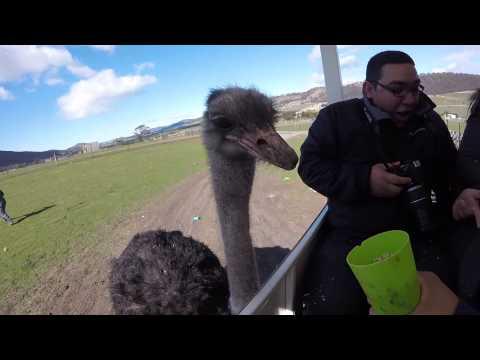 Zoodoo Zoo in Tasmania
