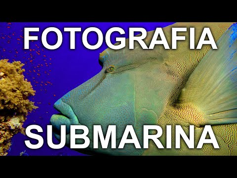 fotografia-submarina-|-porque-es-tan-diferente-a-la-fotografia-en-el-aire-|-bab---buenos-aires-buceo