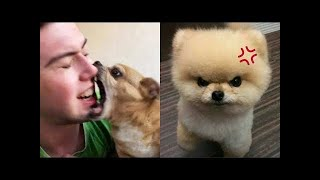 Funny Dogs And Cats of TikTok  Angry Pets Videos