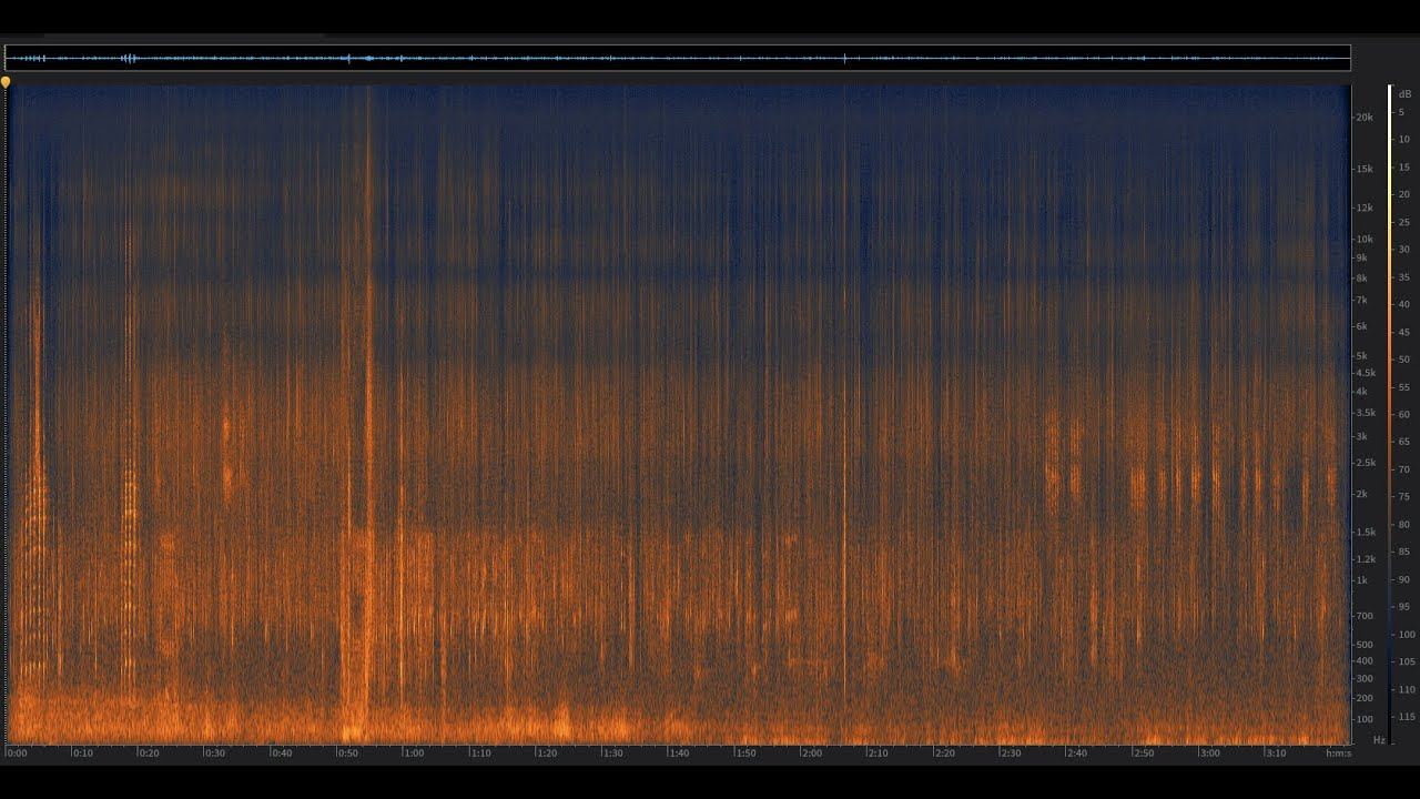 Twenty Black American Ducks: Yosemite National Park, California | Spectrogram Follow