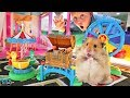 GIANT HAMSTER RACE in Giant LEGO BOX FORT! Two Cute Hamsters Race!