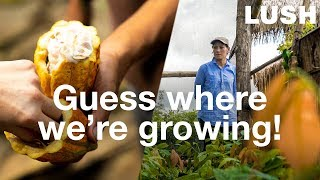 Lush Cosmetics: Regenerative Farming in Guatemala