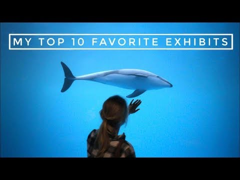 My Top 10 Favorite Zoo Exhibits
