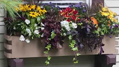 Window Boxes Planting Tips