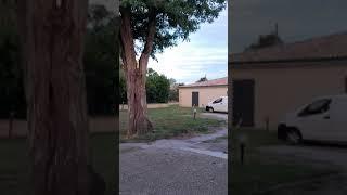 Destruction nid frelons asiatiques Château l'Hospital Portets (33)