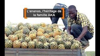 Côte d'Ivoire : L'ananas, l'héritage de lafamille AKA